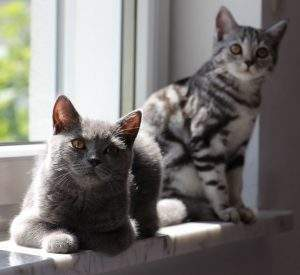Wie Katzen erziehen?